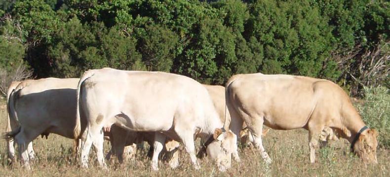 vaques_pastorant