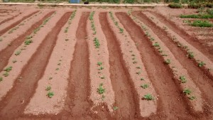 Hort sense pesticides ni herbicides
