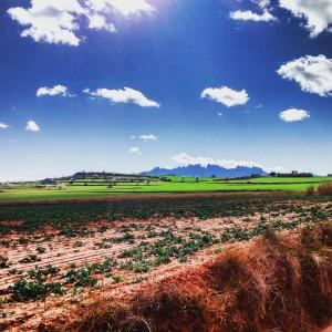 Conreu amb vistes a Montserrat.